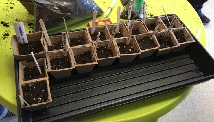Des semis pour le prodigieux jardin!